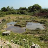 Existing Great Crested Newt pond.