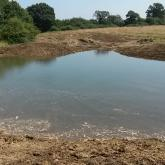 Newly created Great Crested Newt pond.